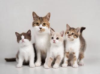 Any Cat Breed