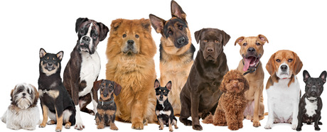Any Dog Breed
