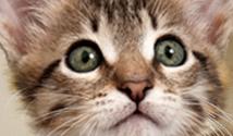 Feline DNA Testing
